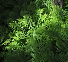 Forest Ferns 2 by marybedy