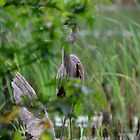 Hide and Heron by Mully410