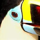 Closeup of a Red-billed Toucan at Iguassu, Brazil.  by Carole-Anne