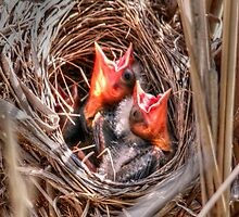 Baby Blackbirds by Larry Trupp