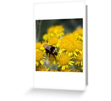 Bumble boogie Greeting Card