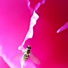 Hot Pink Buzzy by Sandy  Taylor Photography