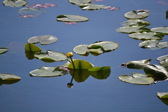 Spring on Fernon  Lake by Kate Farkas
