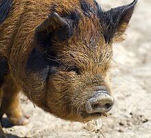 Piggy Portrait by friendlydragon