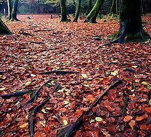 Autumnal Leaves, Golitha Falls, Cornwall by largeformat1
