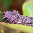 Wise Old Grasshopper - Costa Rica by Michelle Hamilton
