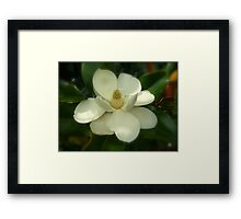 Magnolia Flower Blooms NC By Jonathan Green Framed Print