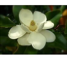 Magnolia Flower Blooms NC By Jonathan Green Photographic Print