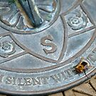 Bee on Sundial by Steve