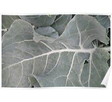 Okeechobee Farms - Broccoli Leaf Poster