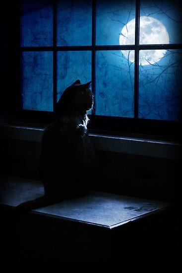 Black Minnaloushe watches the Moon by Megan Noble