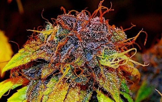 Blueberry Buds by FloraDiabla