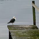 Keeping and Eye on The Jetty by DEB CAMERON