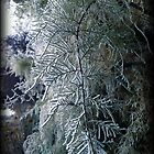 Frosty fronds by revana