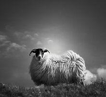 le fluff by Dorit Fuhg