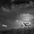 sheep clouds by Dorit