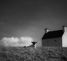 silence of the lamb by Dorit Fuhg