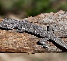 Spiny Tailed Gecko by Carmel Williams