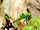 Hungry Little Dragonfly by Marcia Rubin