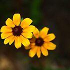 Yellow Lady by Cynthia Broomfield