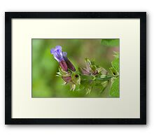 Sage ...Going to Seed (as-is) Framed Print