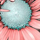 Candy Pink Sunflower by Catherine  Howell