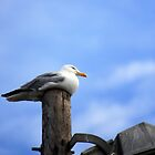 Roosting Seagull by alistair simpson