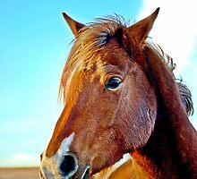 Color Horse Image by Laurast