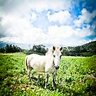 Horse in the field, wide shot - Sulawesi by shellfish
