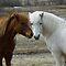 Togetherness (Animals)