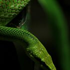 Rough Green Snake by James Hennman