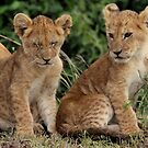 Out of Africa - Sibling Cubs by Sally Haldane