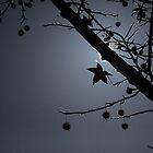 Autumn's Last Star by ShotsOfLove