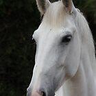 Horse 9012 by João Castro