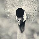 African bird in Black & White by starbucksgirl26