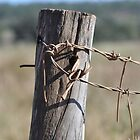 Rusty wire and fence post by Anthea Bennett