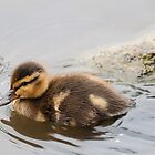 Wood Duckling by titus