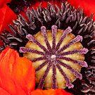Colorful Bloom by Janet Fikar