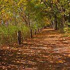 Along The Shaded Path by © Hany G. Jadaa © Prince John Photography