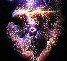 Giant anemone-Melbourne Marina by neverforgotten