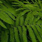 Fern at Whiteoak Canyon by Valarie Napawanetz