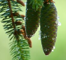 Pine Cones And Needles by doszili