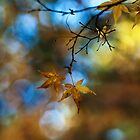 Acers Blue Heaven by mikereid