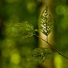 Tattered Leaves by mikereid