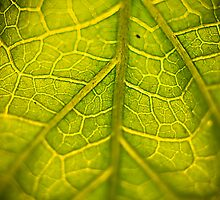 Green Veins by Matthew Osier