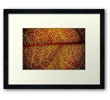 Orange and Red Framed Print