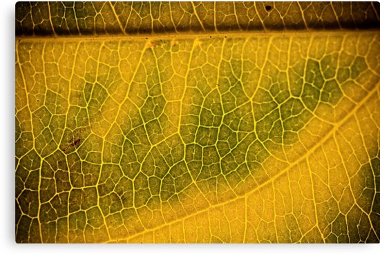 Yellow by Matthew Osier