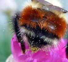 Cute Beehind by bruxeldesign