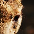 Eye Of A Kangaroo by Liza Barlow