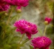 Passion for Pink by Robin Webster
